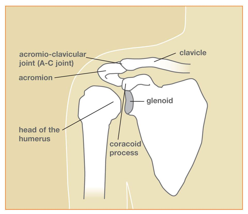 Blog Page 2 Of 3 Orthopedic Sports Medicine And The Root Middle Finger On Index Bone See Diagram Types Shoulder Fractures